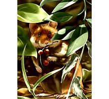 European Hamster under Shadows Photographic Print