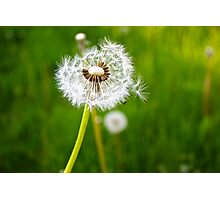 The dandelion Photographic Print