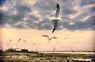 Seagulls Dance at Sunset by Nigel Bangert