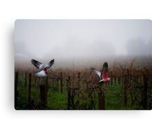 galahs in the mist Canvas Print
