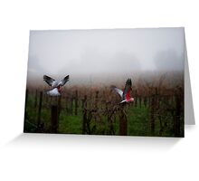 galahs in the mist Greeting Card