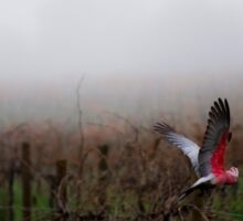 galahs in the mist Sticker