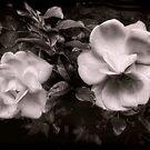 Vintage Roses in Antique Tones by LouiseK