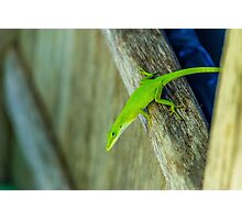 Green Guy Photographic Print