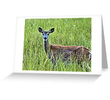 Doe In The Field Greeting Card