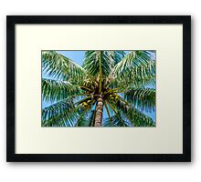 Driving me Coconuts Framed Print