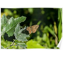 Speckled Wood Poster
