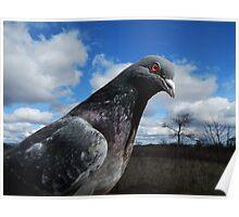 Pigeon. Poster