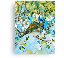 Spring Birdie Canvas Print