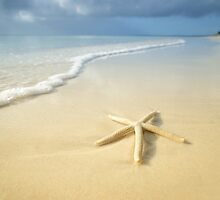 Washed Up In Paradise #2 by shuttersuze75