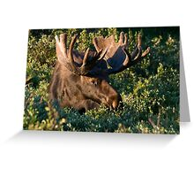 Grazing Moose Greeting Card