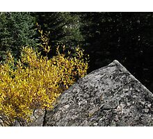 Boulder with Yellow Leaves Photographic Print