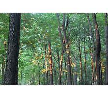 Forest At Sunset Photographic Print