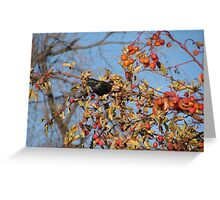 European Starling in Autumn Cherry Tree #2 Greeting Card