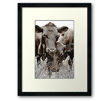 Friendly Cows Framed Print