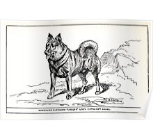 All about dogs a book for doggy people Charles Henry Lane 1900 0315 Norweigan Elkhound_jpg Poster