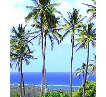 Palm Trees Beside The Blue Sea Photographic Print