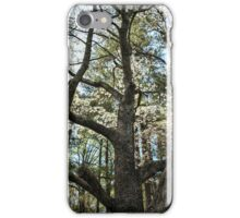 Looking Up the Trunk iPhone Case/Skin