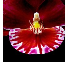 Prom - Orchid Alien Discovery Photographic Print