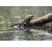 Australian Eastern Water Dragon Photographic Print