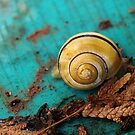 Yellow Snail House VRS2 by vivendulies
