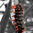 Devil Worm by Pandrot
