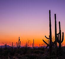 Saguaro by Tod and Cynthia Grubbs