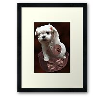 MALTESE PUPPY-JUST PLAYIN WITH MY YO-YO - I WONDER IS ANYBODY WATCHING LOL /PICTURE/CARD Framed Print