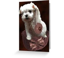 MALTESE PUPPY-JUST PLAYIN WITH MY YO-YO - I WONDER IS ANYBODY WATCHING LOL /PICTURE/CARD Greeting Card