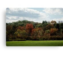 Autumn - One Tree at a Time Canvas Print