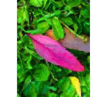 Pink Leaf Lying on the Ground Photographic Print