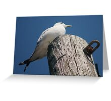 With Crossed Tail Feathers Greeting Card
