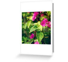 Bougainvillea flowers in a garden Greeting Card