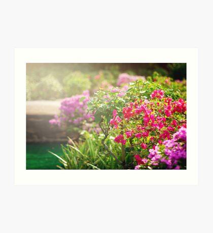 Bougainvillea flowers in a garden Art Print