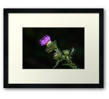 Purple prickly carduus Framed Print