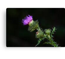 Purple prickly carduus Canvas Print