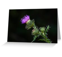 Purple prickly carduus Greeting Card