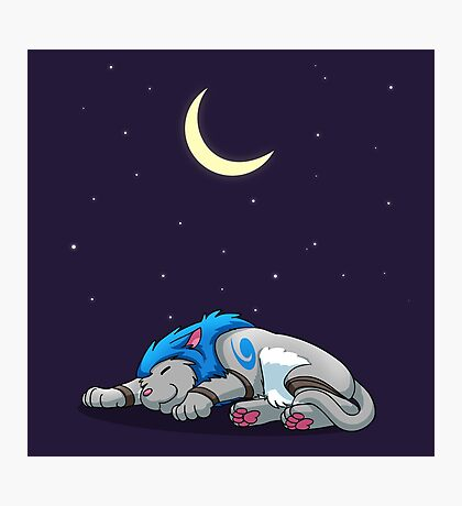 Derpkitty sleeping Photographic Print