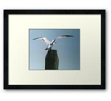 Perching Seagull Framed Print