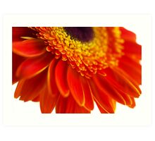 Orange flower background with close-up gerbera Art Print