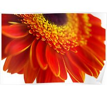 Orange flower background with close-up gerbera Poster