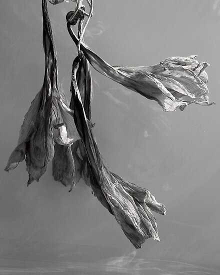 Dried Blooms by Barry Doherty