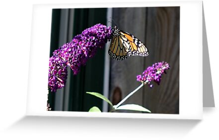 The Butterfly by Barry Doherty