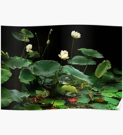 Twilight in the Lotus Patch Poster