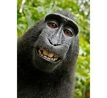 Monkey Selfie - Macaque Photographic Print