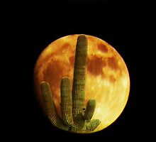 Cactus Moon by Winona Sharp