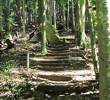 Steps up on the Lyrebird track, Wollumbin N.P. N.S.W. Hinterland. by Rita Blom