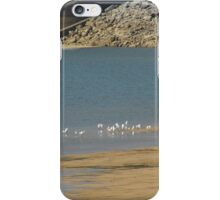Herons On the Sandbar iPhone Case/Skin