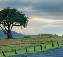 Lone Tree at Hastings Point, NSW by Ann Pinnock