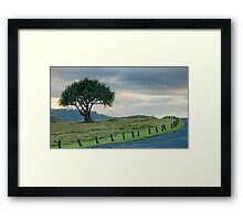 Lone Tree at Hastings Point, NSW Framed Print